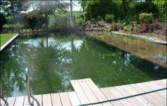 Aanleg zwemvijver for Natuurvijver maken